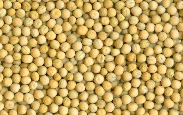 YELLOW PEAS