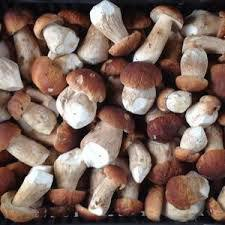 mushrooms_fresh
